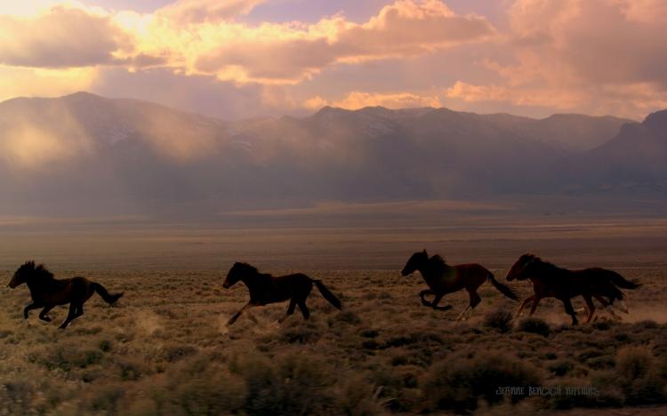 elusive-and-free-wild-horses1